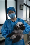 Pandas Photo