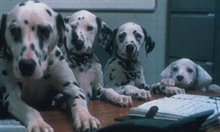 102 Dalmatians Photo 2 - Large