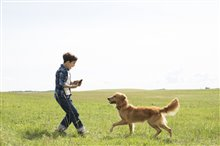 A Dog's Purpose Photo 1