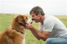 A Dog's Purpose Photo 3
