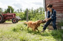 A Dog's Purpose Photo 17