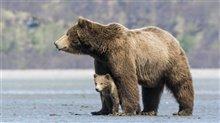 Bears Photo 1