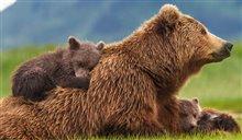 Bears Photo 6
