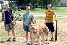 Because of Winn-Dixie Photo 10 - Large