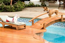 Beverly Hills Chihuahua Photo 2