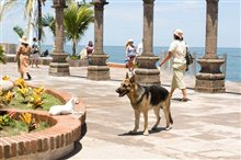 Beverly Hills Chihuahua Photo 10