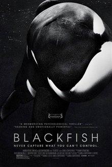 Blackfish Photo 4