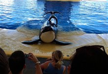 Blackfish Photo 2