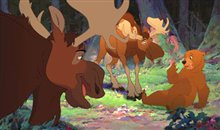 Brother Bear Photo 2
