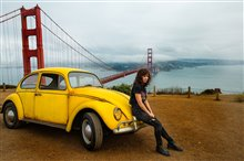 Bumblebee Photo 4