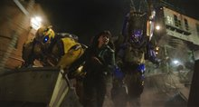 Bumblebee Photo 14