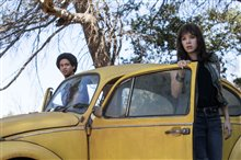 Bumblebee Photo 16