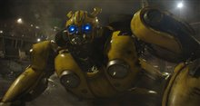 Bumblebee Photo 30