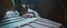 Cats (v.f.) Photo 10