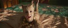 Cats (v.o.a.s-t.f.) Photo 20