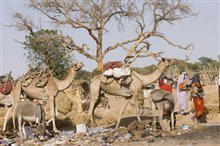 Darfur Now Photo 15