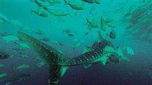 Deep Blue Photo 6 - Large