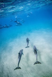 Dolphin Reef (Disney+) Photo 2