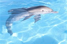 Dolphin Tale Photo 6