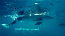 Dolphin Tale photo 9 of 32