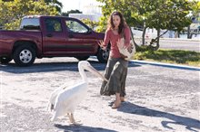 Dolphin Tale Photo 23