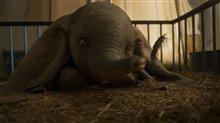 Dumbo (v.f.) Photo 1