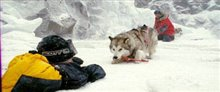 Eight Below Photo 2