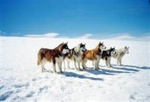 Eight Below Photo 9