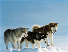 Eight Below Poster Large