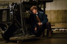 Fantastic Beasts and Where to Find Them photo 13 of 63