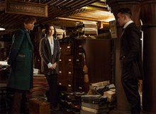 Fantastic Beasts and Where to Find Them photo 15 of 63