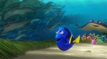 Finding Dory photo 21 of 29