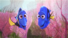 Finding Dory photo 23 of 29