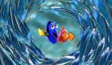 Finding Nemo Photo 4