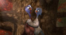 Free Birds Photo 2