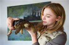 Laggies Photo 6