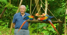 Life in Color with David Attenborough (Netflix) Photo 1