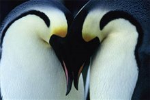 March of the Penguins Photo 9