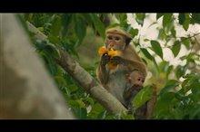 Monkey Kingdom Photo 2