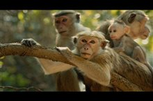 Monkey Kingdom Photo 4