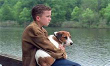 My Dog Skip Photo 4 - Large