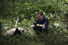 Pandas Photo 3