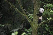 Pandas Photo 5