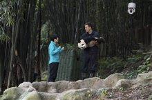 Pandas Photo 6