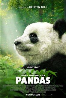 Pandas Photo 31