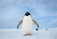 Penguins Photo 6