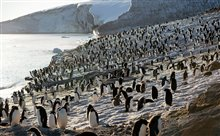 Penguins Photo 13