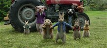Peter Rabbit Photo 8