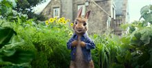 Peter Rabbit Photo 20