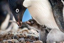 Pingouins Photo 2
